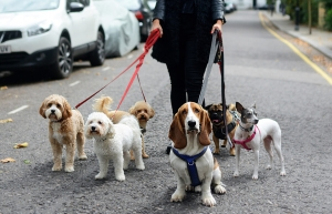 Dog Walkers London